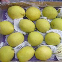 Top quality Fresh Shandong Pear