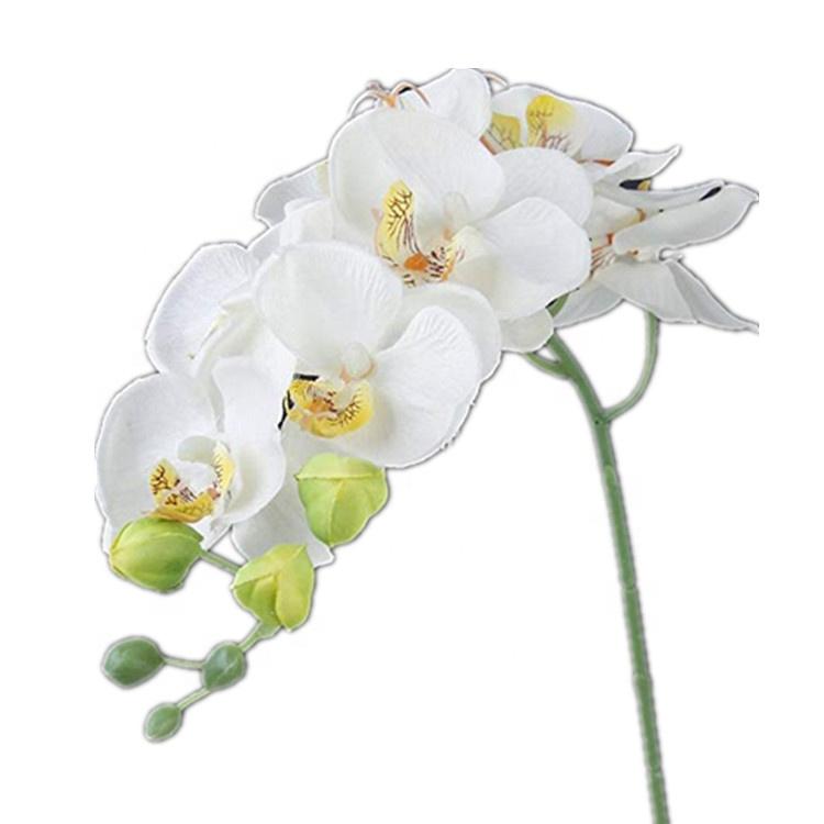 Москва купить оптом цветы орхидеи
