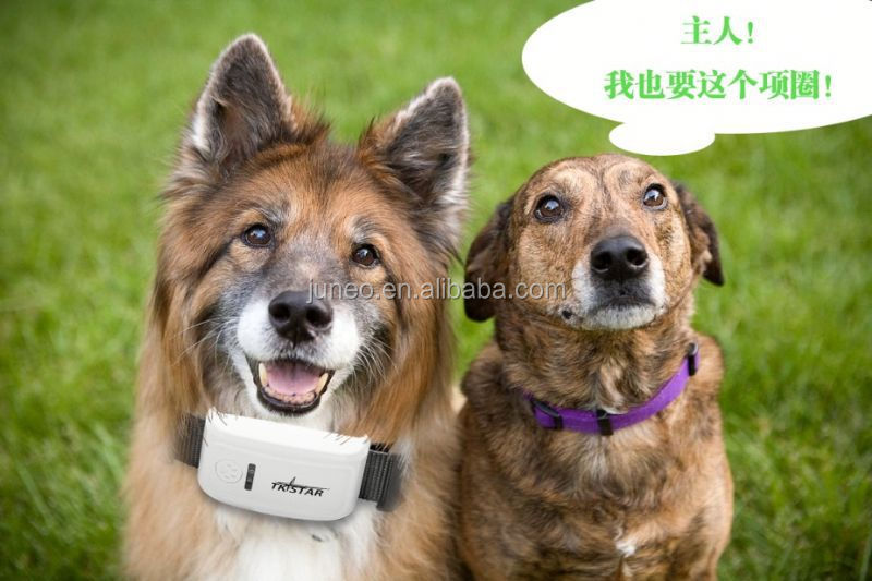 2015 New TKSTAR Pet Tracker!gps tracker pcba/App Pet Gps Tracker