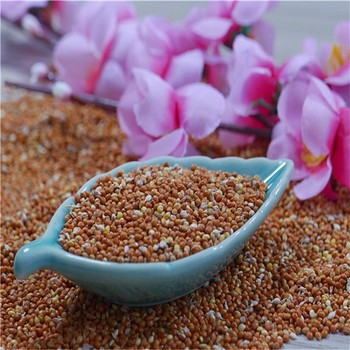100% Natural High Quality Red Glutinous Broomcorn Millet / Red Panicum  Millet /foxtail Millet Wholesale - Buy Wheat/barley,Seed Bird Food