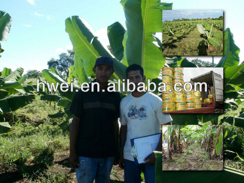 Agricultural irrigation equipment to East Africa For Banana