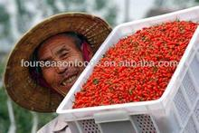 High quality iqf frozen goji berries 2015 crop