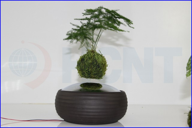 Floating levitating plant pot magnetic floating real plant for Floating plant pots