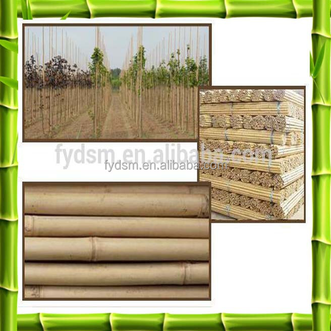 Construction Material Treated Raw Bamboo Poles