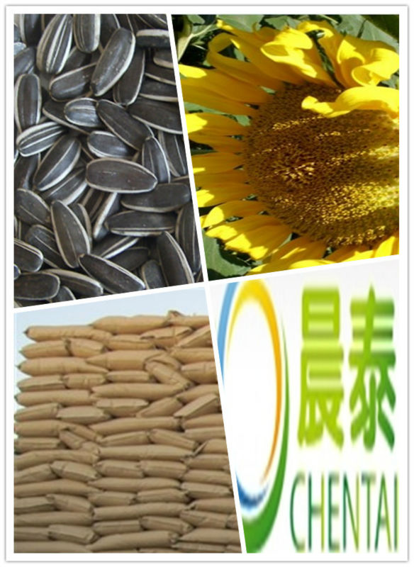 top quality non gmo sunflower seeds / big company and factory