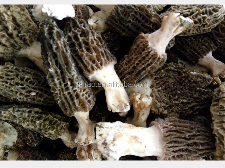 Factory price fresh morel champignon canned mushrooms