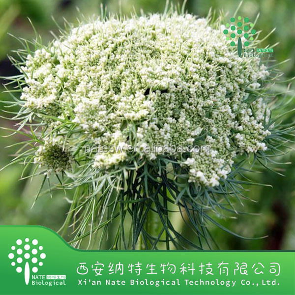 Low Price Beta-carotene 30% Carrot Seed Extract Powder From China ...