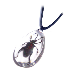 Real Beetle Necklace the Most Trending Cool Jewely Pendant