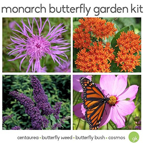 Save 25%! MONARCH BUTTERFLY GARDEN Seed Kit - 4 Flowers - Butterfly Bush, Butterfly Weed, Centaura, Cosmos - EcoFriendly, Organic