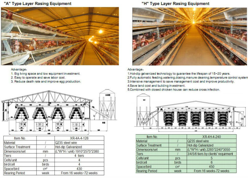 Automatic Control Low Cost Poultry Shed Farm For Broiler