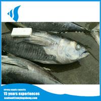 Whole yellowfin tuna frozen yellowfin tuna saku