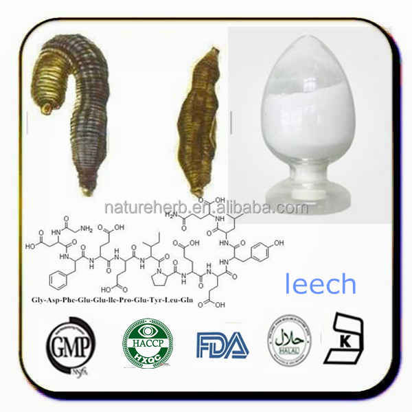 Ma huang extract powder,leeches used for medical treatment
