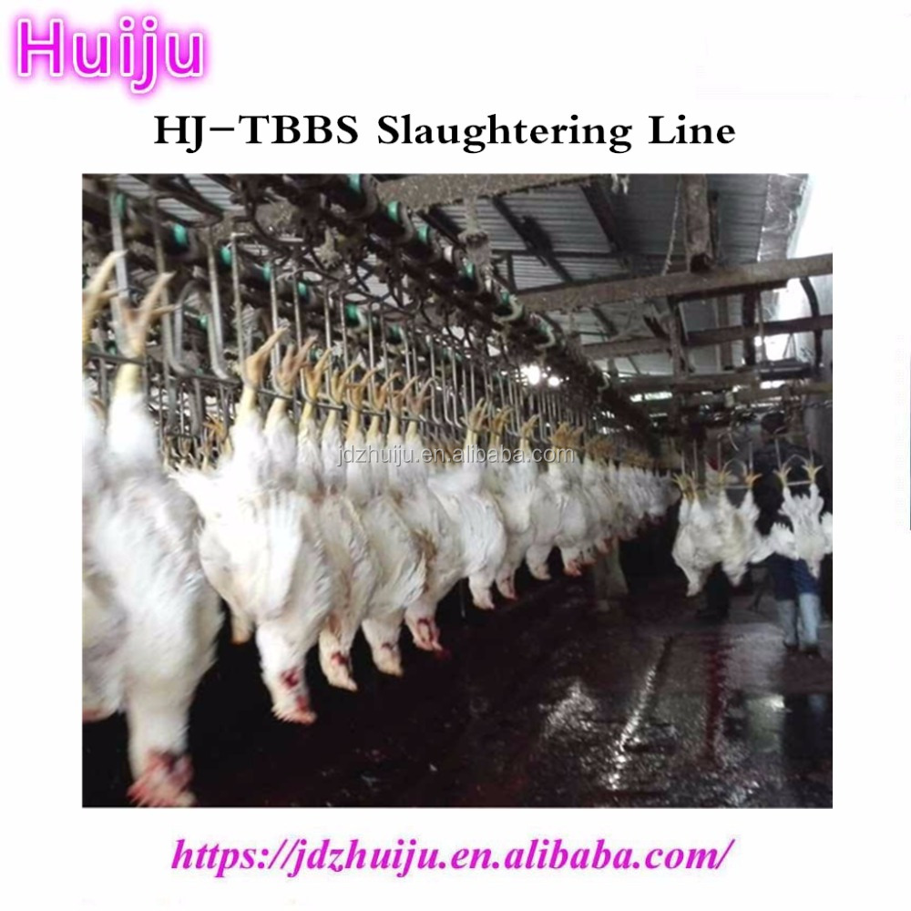 CE butcher machinery 50pcs/h chicken abattoir equipment