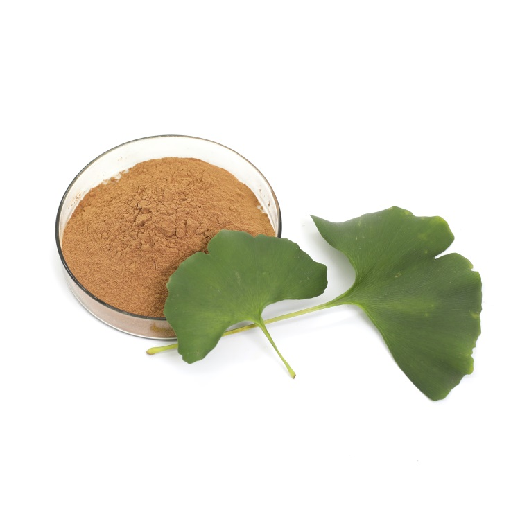 herbal supplement ginkgo leaf extract 24/6 chinese herb