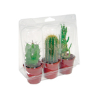 Custom Design Clear PVC/PET Plastic Packaging Box for Little Potted Plants