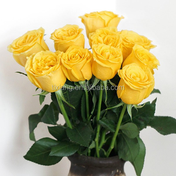 Wholesale big bud size fresh rose flowers directly from rose farms