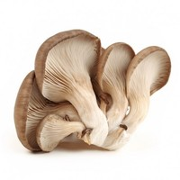 China Dried oyster mushroom for sale oyster mushrooms 1k