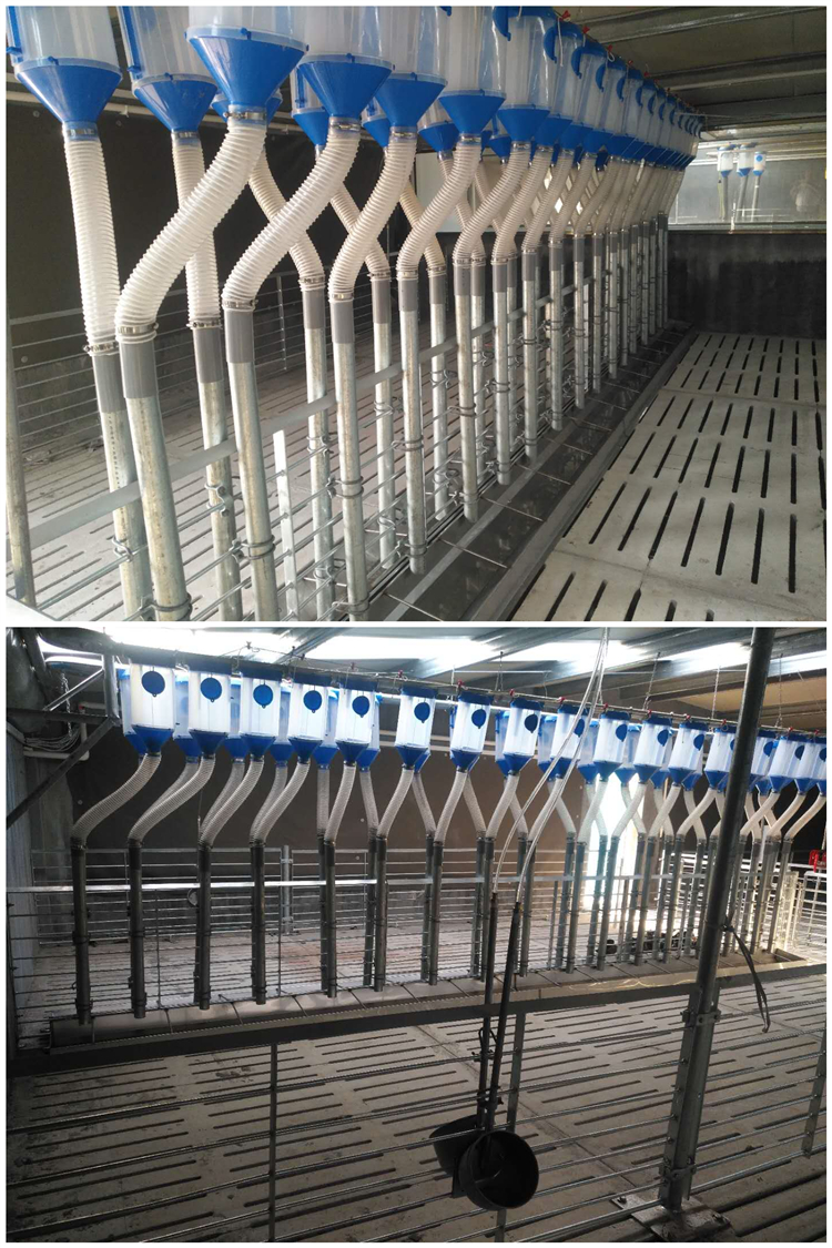 Plastic trough pig automatic feeders for sow