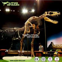 Life-size Museum Display Dinosaur Skeleton Replica for Sale