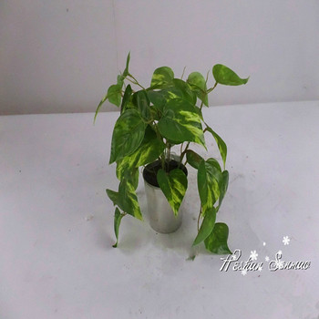 All Types Of Plants Artificial Potted Simulation Mini Bonsai For Table And Home Ornament
