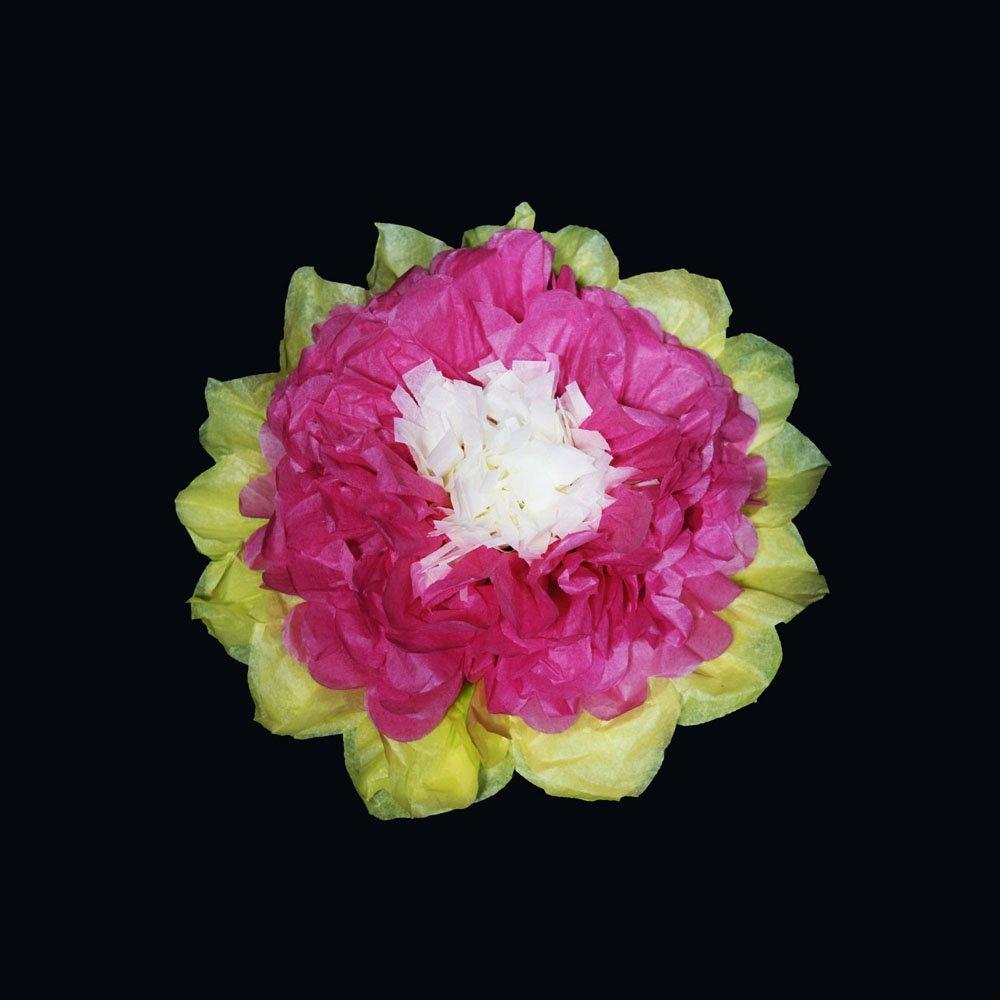 Buy Quasimoon 10 Multi Color Tissue Paper Flower Decorations