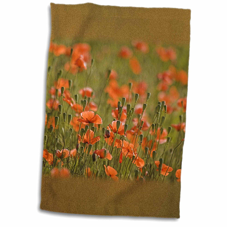 3dRose Danita Delimont - Flowers - Washington, Colfax, Fire Poppy flowers - US48 TEG0162 - Terry Eggers - 12x18 Towel (twl_96954_1)