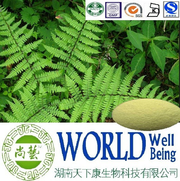 Hot sales plant extract ratio 10:1 20:1/Chain Fern extract/Warm stomach Free sample