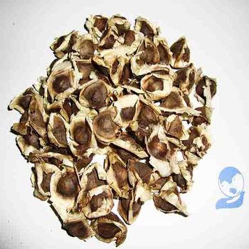 moringa oleifera zaden kopen