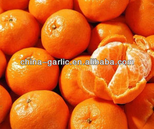 Fresh Orange With Competitive Price
