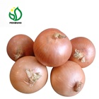 2019 Fresh Onion/Onions Price Ton New Crop