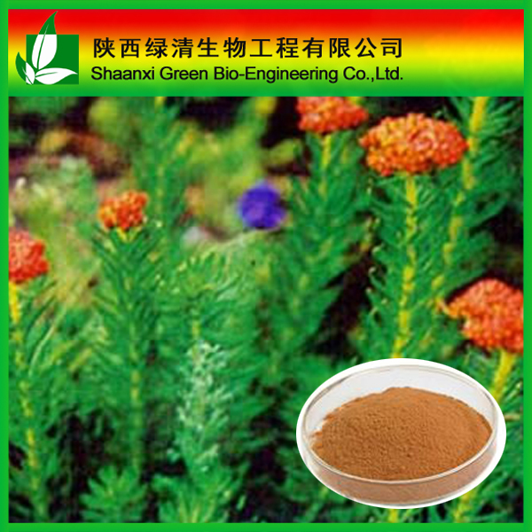 Herbal extract rhodiola rosea extract salidroside powder CAS:10338-51-9