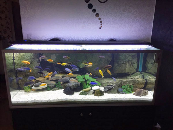 Heto Led Fish Light T5 Led Aquarium Lighting For Marine Use