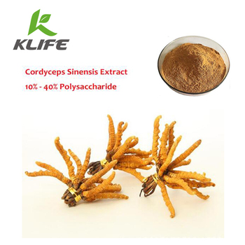Best price Cordyceps Extract Cordyceps Sinensis Extract Powder with 50% Polysaccharides Increases lung function