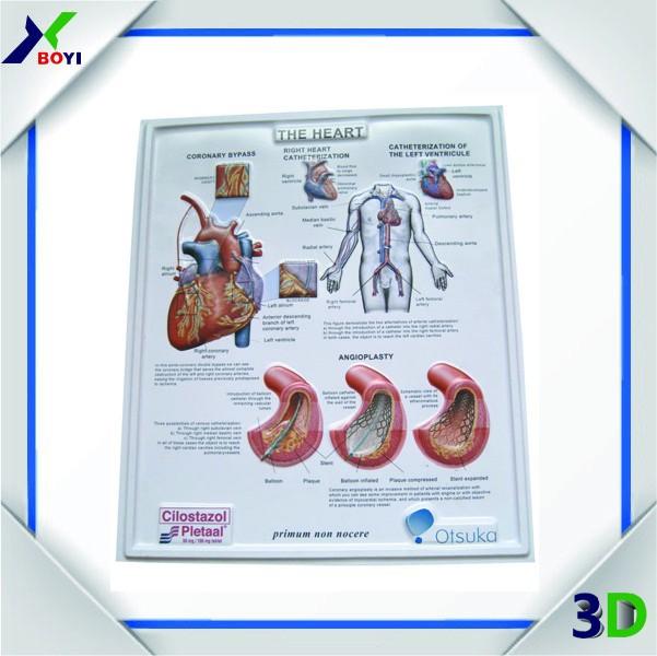 3d Pvc Sistema Digestivo Carta Médica/3d Relieve Anatomía Médica ...