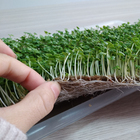 Eco-friendly hydroponic growing mats for microgreens grow tray