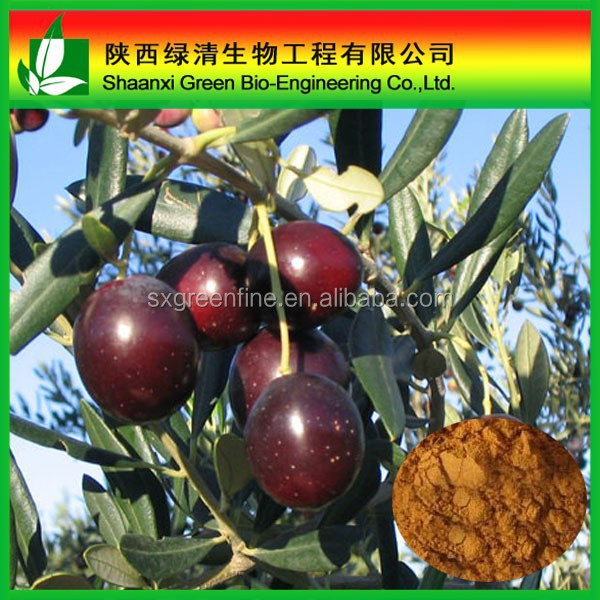 Cosmetic and Pharmaceutical grade, Natural Olive leaf extract 10-98% Oleuropein, 1-98% Hydroxytyrosol