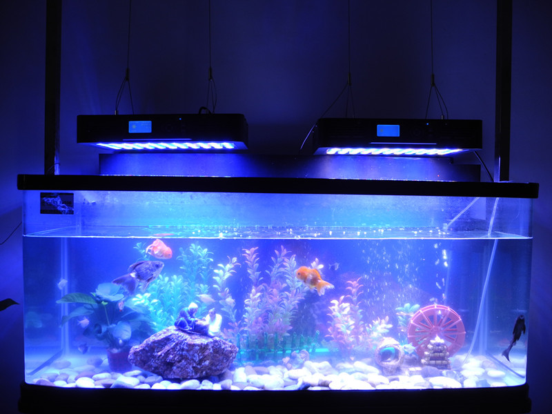 Chinese Coral Reef Used Led Aquarium Lights,Programmable Led ...