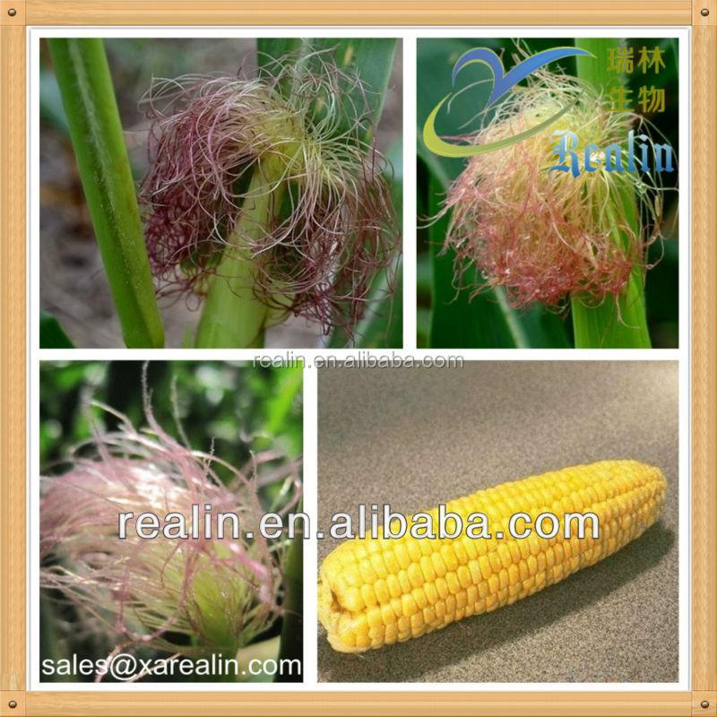 Как принимать кукурузные рыльца при сахарном диабете