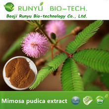 Free sample Mimosa Pudica Dry Extract 100% natural