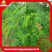 Imported raw material from india, moringa powder benefit for human