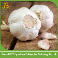 Fresh garlic specification China best