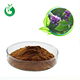 Competitive price Kudzu /Puerarin flower extract