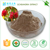 2016 factory supply best quality plant extract powder black cohosh extract