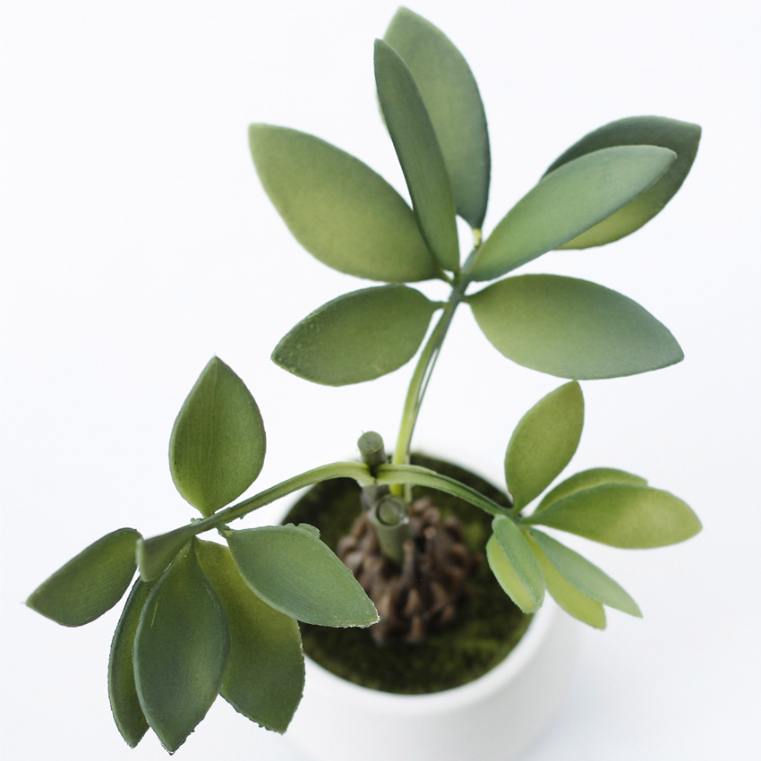 Shininglife wholesale plastic money <strong>tree</strong> potted pachira bonsai <strong>house</strong> plant potted plant
