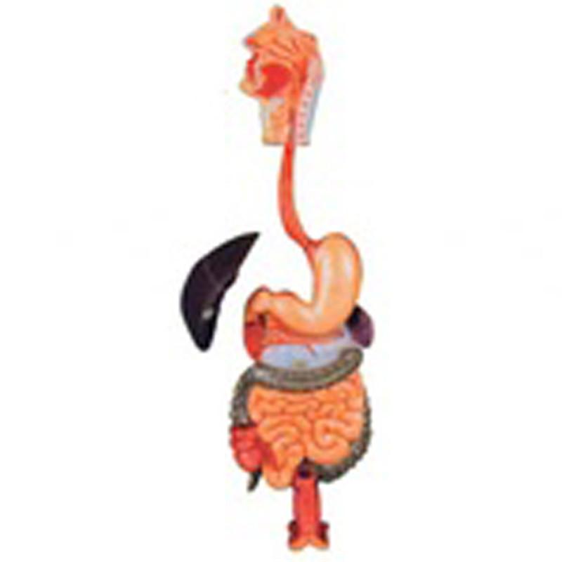 Venta al por mayor sistemas digestivos-Compre online los mejores ...
