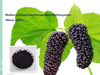Hot sale Mulberry Extract Supplier