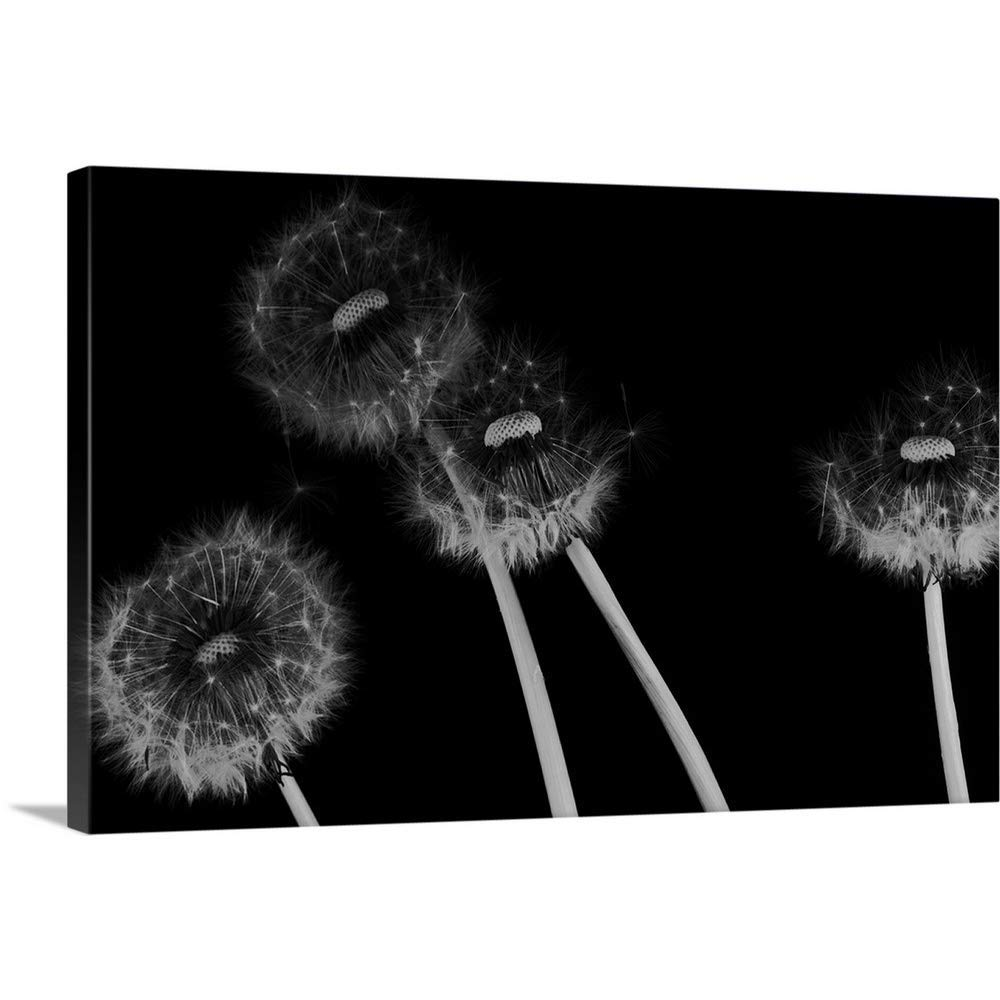 "Gallery-Wrapped Canvas Entitled Dandelion Fluff in Black and White by Great Big Canvas 60""x40"""