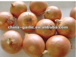 2012'Crop Yellow and Red Onion Supplier / Wholesaler / Distributor