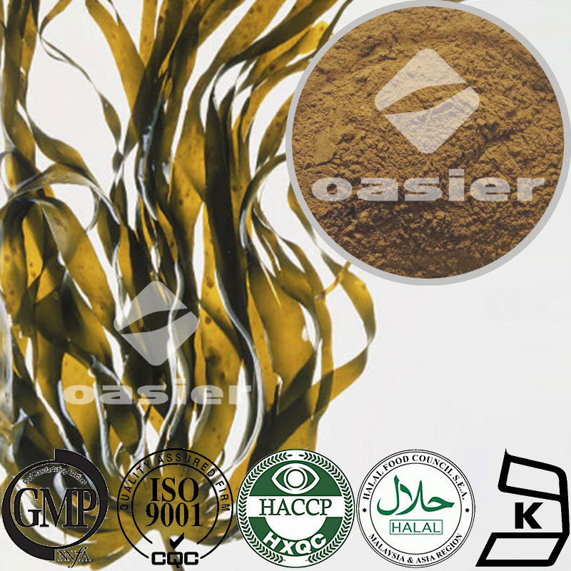 Foold Natural Plant Extract Kelp Fucus Extract 0.1-0.3% iodine powder Cancer Prevention