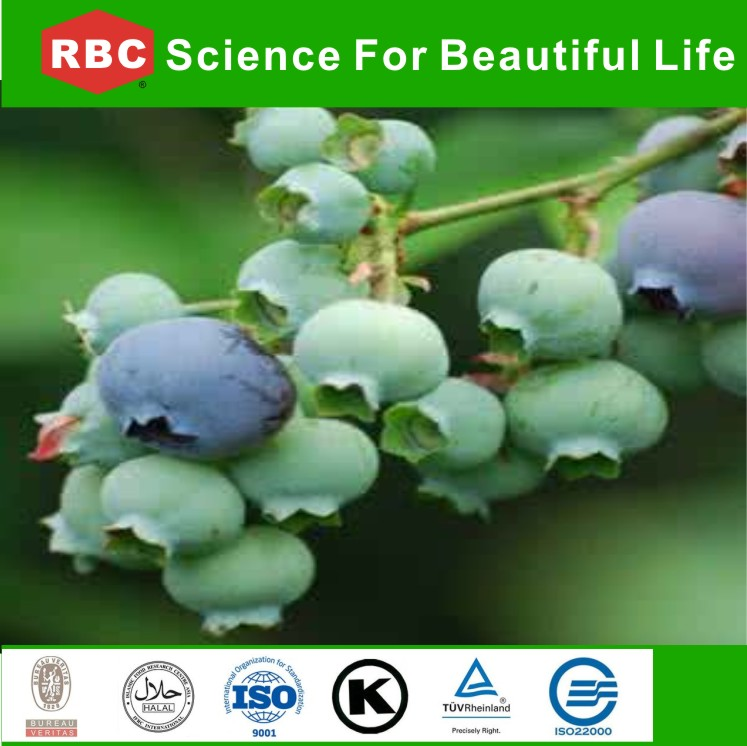 Natural Bilberry Vaccinium Uliginosum plant /herbal extract/plant extract